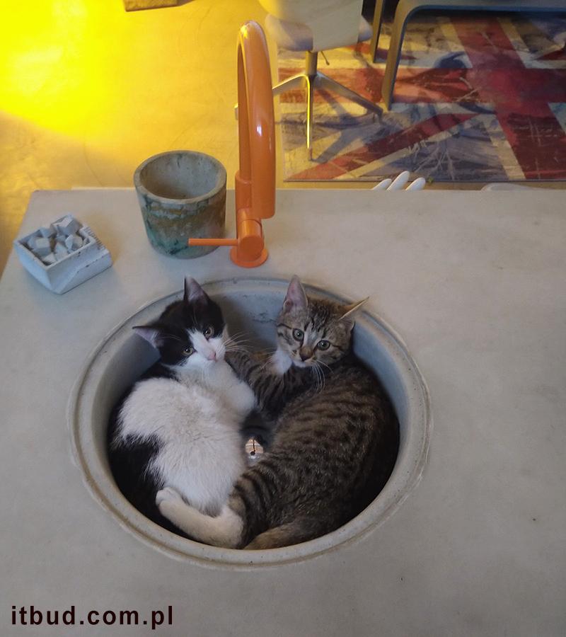 Kotki w Faktorii Betonu